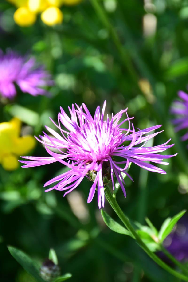Wild Wood Flowers #WordlessWednesday